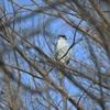 水元公園は野鳥もゆっくり!