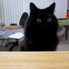 YouTubeで有名な「しゃべる猫しおちゃんとティーちゃんの写真展」が開催中だそうです💖
