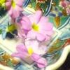 サクラソウの苗木を買ったから・・・もうすぐ春が来る!