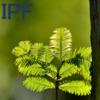 ★特発性肺線維症(IPF)のまとめ