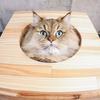 猫を飼う上で気をつけなければいけない事6つと幸せの覚悟