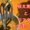 【奮闘!】緊急クエスト!椿咲き乱れる森の龍。果たして大使はハンターランク2に上がることができるのか?!【そば処 椿野】