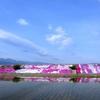 堤防の彩り