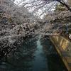 大垣まつりの夜宮と水門川の桜