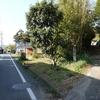 照蓮の標石(徳島4、高知、香川)