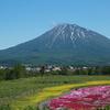 【北海道倶知安町三島さんの芝ざくら庭園】今年、もう一度行きたい場所を妄想してみる。
