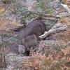 第六話: ところで動物学ってどんなこと勉強するの?~タスマニア大学での生活~