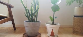 DIYテラコッタ鉢を塗装してみた!