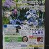 【散歩】小田原フラワーガーデンの花菖蒲~今見頃です
