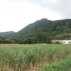石垣島への旅 2日目はさらに…路線バスで川平湾から米原ヤシ群へ