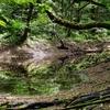 道芝の池(青森県深浦)