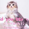 【週末英語#125】英語であいづちを打つ「Did you say 〜?(〜って言った?)」