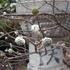 春が来るまでにお掃除お掃除! ~お家にあるものでクモの巣取りをしてみた~
