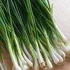 健康にいい!分葱(わけぎ)に含まれる栄養と健康効果10選について
