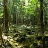富士が育んだ原生林、青木ケ原樹海が観光名所へ!?人気じわりと…
