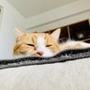 飼い主じゃんの寝ても覚めても猫。