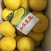 【おすすめ】ふるさと納税で高知県須崎市から文旦とポンカンが届いたので紹介