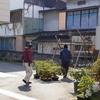 福寿草咲きました。