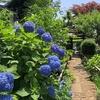 紫陽花を見に行く 川崎の多摩麻生あたり