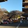 今日は正月3日目!朝方冷えた?日中も晴れだが空気が冷えていた!