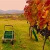 『ワイン体験レポート10月』Vol.1