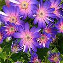 花のスピリチュアルくらし