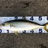 【釣り】初心者・ファミリーフィッシング向け魚釣り入門!海釣りエサ編🐡