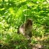 私が猿が怖くなった訳 #猿