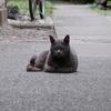 6月11日 西新宿から渋谷区本町まで猫さま歩き とその情景