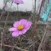 新型コロナウイルス感染症対策 12/16 (水) クーポンプレゼント