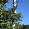 有為自然 652  「街の灯」 と おしゃべりジジイ