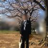 【小学校卒業式 男の子の服装】レンタルスーツはサイズ選びが命!