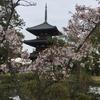 【春の奈良旅1】世界遺産 法起寺の日本最古の三重塔と桜の競演