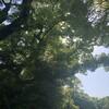 緑、日に日に青く。 ~愛知県名古屋市「熱田神宮」訪問記