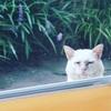 室内をのぞきみる猫と外にでたい猫