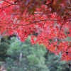 宮島へ紅葉を見に行ってきた