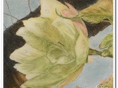 黄桜の絵が完成しました〜♪きぃ〜ザ・ク・ラぁ〜ぁドン♪〜