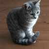 猫って癒し!猫を飼うと家庭がどう変化するのか?