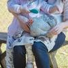 ブリスベン近郊、幼児におすすめな格安で動物とふれあえる場所
