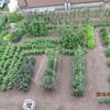 拓友農園の夏野菜