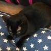 黒猫だけの猫カフェ「ねこびやか」に行ってきた-姫路日帰り旅行記-