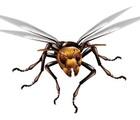 スズメバチの恐怖!持ってて安心ポインズンリムーバー 現役看護師が語る恐怖の実態。(後編)