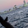 ★ ① 横浜港 【釣れんジャー丸】にて、アジを狙うぜ! ① ~ サビキ集中 『特殊兵器』で釣れたのは!!