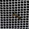 カマキリの孵化とアブラムシ @虫 @家庭菜園 @生物学