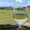 【ニュージーランド】フェリーで40分のワイヘキ島が最高に良かった♡