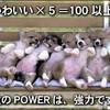 1つの可愛い ×5集まると =体感では、100以上のインパクト!… 数のPOWERは、強力です!