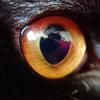 今日の黒猫モモ&白黒猫ナナの動画ー730