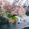 東京の桜名所を撮ってきた。