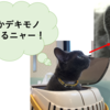 猫の体表にできる肥満細胞腫