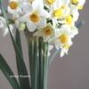 新年に飾る白い花